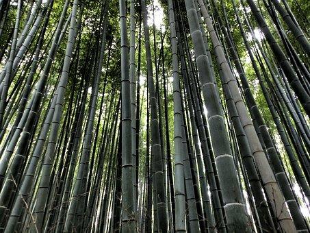 Bambú negro Arashiyama.