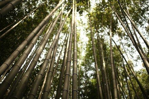 Bambú en Arashiyama.