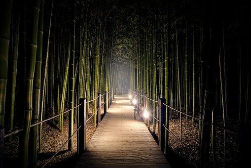 fotografía nocturna del bosque de Arashiyama.
