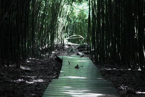Sendero del bosque de bambú.