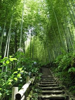 Escalera en el bosque de bambú.