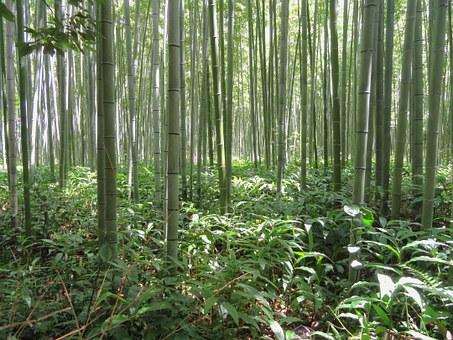 Bosque de bambú y helechos.