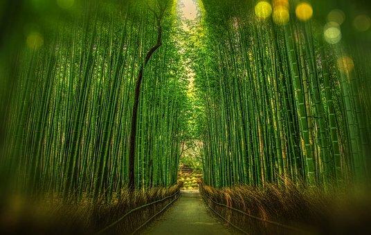 Camino en Arashiyama.